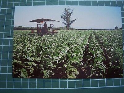 1980's  POSTCARD - TOBACCO - NELSON PROVINCE- NEW ZEALAND - ColorView NM2300 NEW