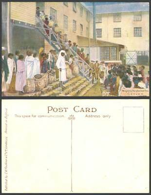 Ceylon Old Artist Drawn Postcard Weighing The Plucked Tea, Lipton Native Workers