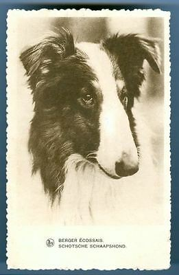 Vintage RARE Postcard PC Berger Écossaise Border Collie Dog Belgium 1935