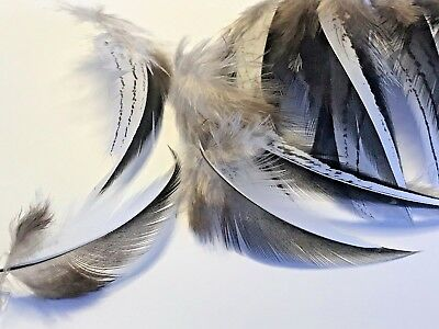 NEW! 20 Silver Pheasant Black White 6-9cm Feathers DIY Art Craft Millinery