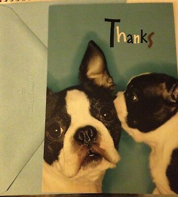 Hallmark Boston Terrier thank you card - cute Boston terrier puppy