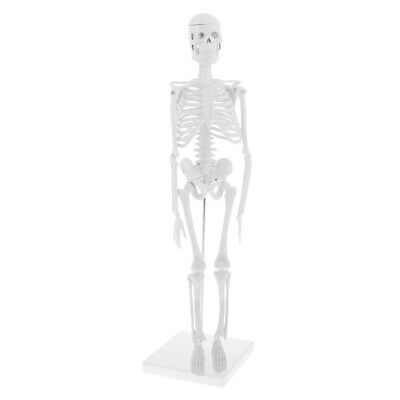 Learning Resources 1:1 Human Body Skeleton Anatomical Model School Teaching Toy