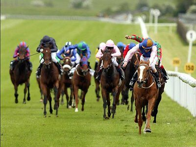 DOMINATE THE FIELD - Horse Racing Laying - Betfair / Betdaq Betting Systems