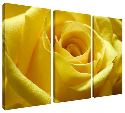 Canvas Wall Art Print Yellow Rose 3 Panel Picture Split