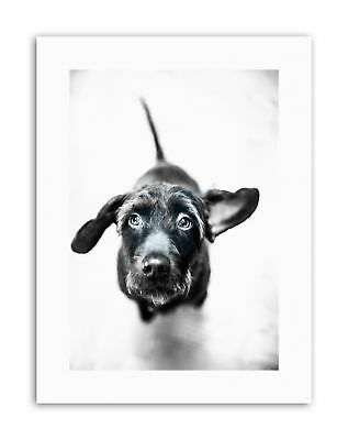 CUTE PUPPY DOG LOOKING UP MONOCHROME Canvas art Prints