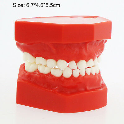 Dental Children Pediatric Teeth Model For Demonstration Study Model 7009-2