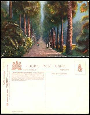 India, Palm Avenue, Royal Botanical Gardens Calcutta Old Tuck's Oilette Postcard