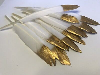 Bulk 10 x 10-16cm GOLD Tip Dipped White Goose Feathers DIY Art Craft Wedding