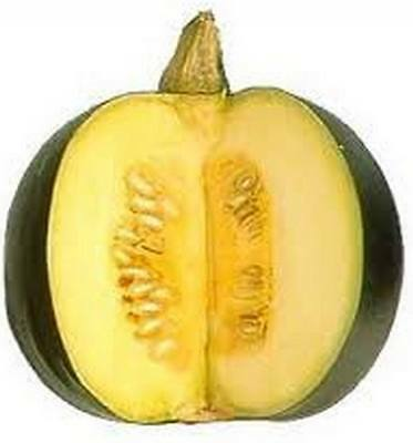 SOUTH AFRICAN GEM SQUASH  - 15 seeds (AFRICAN HERITAGE)