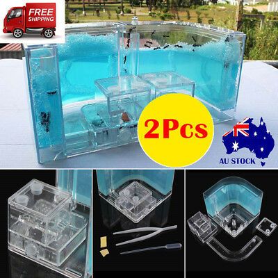 2PCS Ant Farm Workshop Insects Home Castle Maze Natural Ants Live World Kid Toys