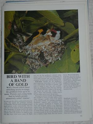 Living Countryside #20 – bird with a band of gold  – (vol 2  P381 to 400 )