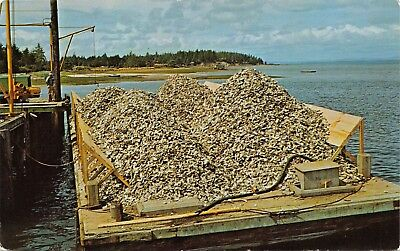 OYSTER SHELLS LOADED ON BARGE-TO BEDS NEAR NAHCOTTA WASHINGTON POSTCARD 1960s