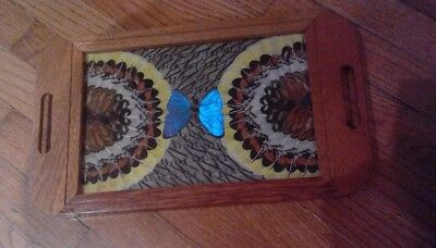 Vintage  Butterfly Wing  Inlaid Wooden  Tray Very Good Condition