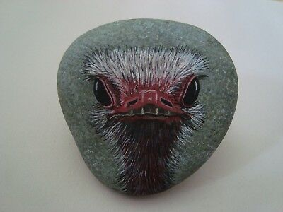 Ostrich Portrait Bird hand painted on a rock by Ann Kelly