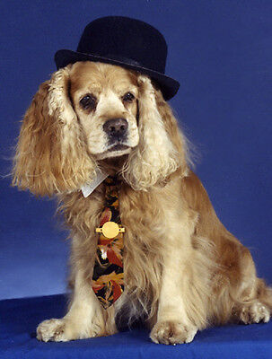 20 Pet Notecards Dog Cocker Spaniel with hat