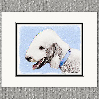 Bedlington Terrier Dog Original Art Print 8x10 Matted to 11x14