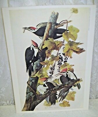 Vintage Lithograph Pileated Wood Pecker 1966 New York Historical Society