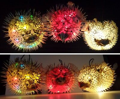 Real Puffer Fish Taxidermy Light Blowfish Led Lamp Fishing Party Gift Christmas