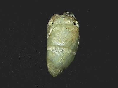 Pre-Columbian Translucent Jade  Avian Pendant, Nicoya, Costa Rica, Authentic