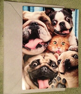 Boston Terrier Other Dogs Funny Birthday Greeting Card Dog From Hallmark Store