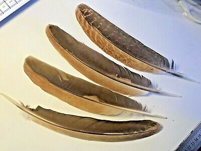 Single RARE Brown Natural Eagle Feather 32cm DIY Craft Smudge Fan Quill