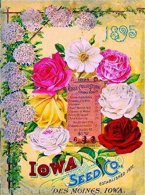 1895 Iowa Seed Rose Collection Vintage Flowers Seed Packet Advertisement Poster