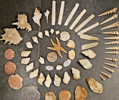 Large Collection of Assorted Sea Shells with large Starfish
