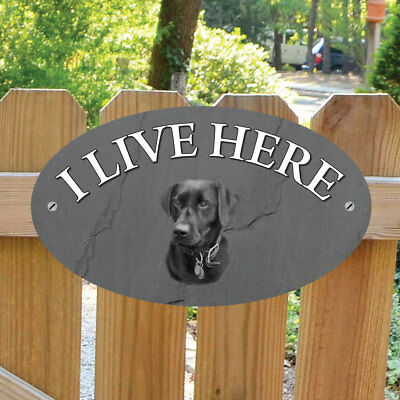 Black Lab I Live Here Sign, Robust Outdoor Labrador Dog Plaque, Dog Gate Sign