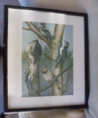 Roger Tory Peterson Wood Frame Print Color Birds Woodpeckers 13.25x11 Vtg. Rare!