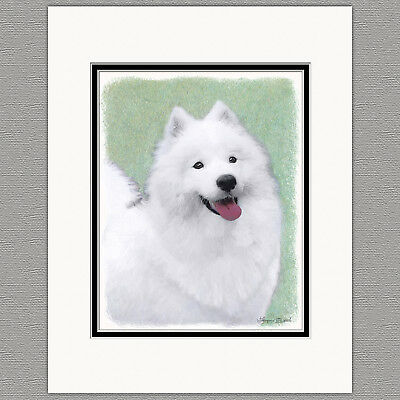 Samoyed Dog Original Art Print 8x10 Matted to 11x14