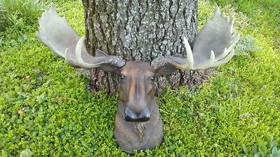 Moose Head Lg Wall Antler Mount Lodge Cabin Taxidermy Faux