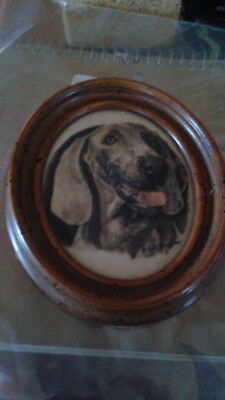 Marvetti Cultured Ivory Engraving of Dog               my  no1