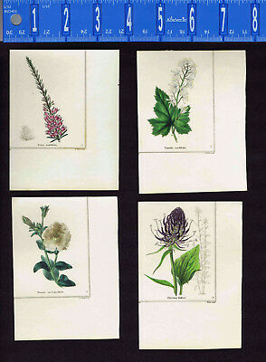 1831 Benjamin Maund Botanical Flowers  (Set of 4) Lot C