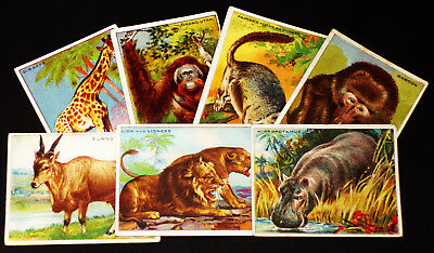 """Lot of 7 1910's """"Exotic Animals"""" Hassan Cigarette Trade Cards"""
