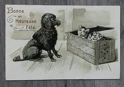 Caniche et chatons, chats - Cpa, carte postale ancienne