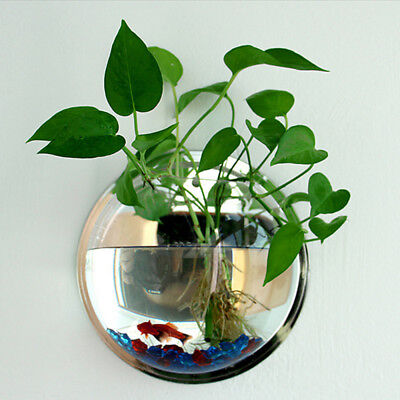 Pot Plant Wall Mounted Hanging-Bubble Acrylic Bowl Fish Tank-Aquarium Decor Set