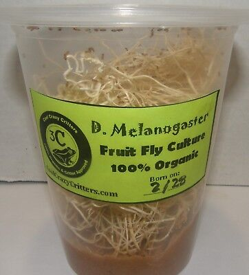 MELANOGASTER FRUIT FLY CULTURE with Care Guide! Live Arrival! Free & Fast Ship