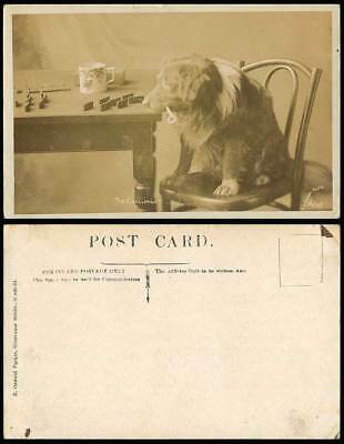 Dog Puppy The Challenge Domino Dominos Mug Table & Chair Old Real Photo Postcard