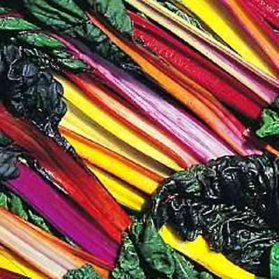 Beet Leaf - Swiss Chard - Bright Lights - allotment vegetable Seeds
