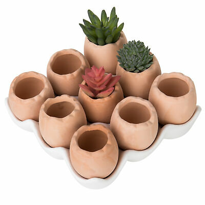 Set of 9 Brown Eggs Design Ceramic Succulent Planters Mini Decorative Pots Tray