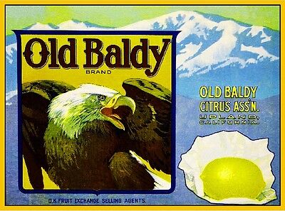 Upland Old Baldy Eagle Light Lemon Citrus Fruit Crate Label Art Print