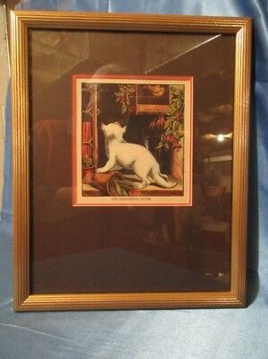 "9256 ~ Vintage Lithograph ~ ""THE DISAPPOINTED KITTEN"" Excellent White Kitten"