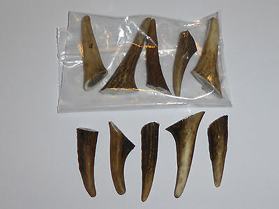 PACKET OF 10 RED DEER HORN / ANTLER ARTS/CRAFT/TAXIDERMY (2-4cm.)