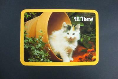 950) Cat Kitten In Flower Pot Drawing Board Greeting Cards Un-Posted Postcard