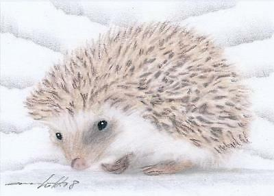 ACEO original pastel drawing white hedgehog by Anna Hoff