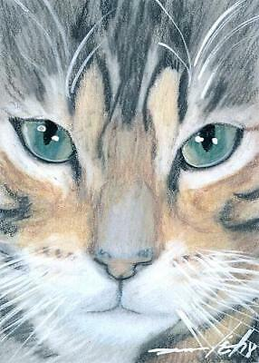ACEO original pastel drawing tabby cat face by Anna Hoff