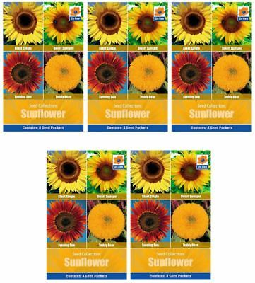 5 PACKETS of SUNFLOWER Collection SEEDS - Sunspot, Single, Evening Sun, Teddy