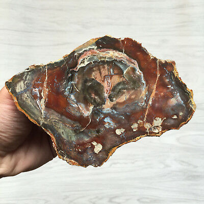 376g Petrified Wood Specimen Slab Fossil Polished Rock Madagascar X051