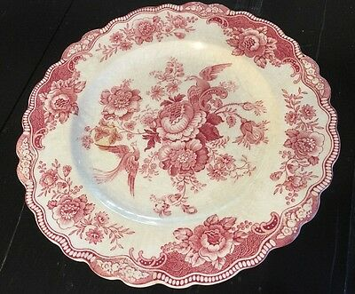 Bristol Old Hall Ware Pink Chintz TOLE BIRDS of Paradise Dinner Plate England*