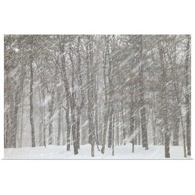 Large snowflakes of first snow falling in deciduous forest Poster Print